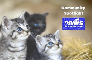 PAWS-of-Bremerton-kittens