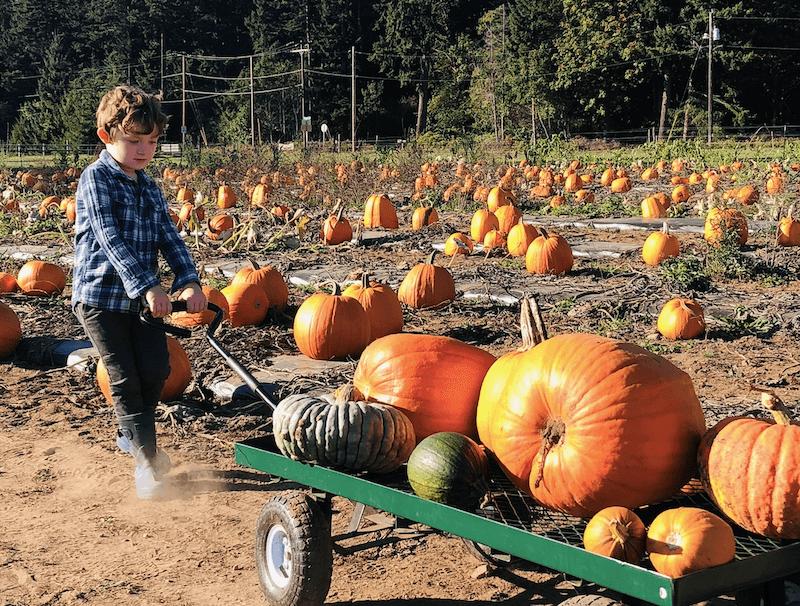 pumpkin-patches-kingston