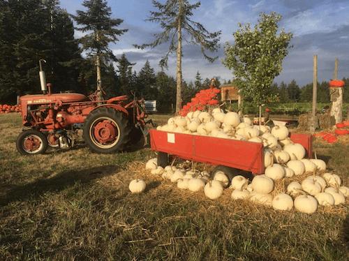 pumpkin-patches-suyematsu-farms